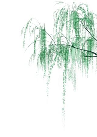 春天小清新水墨柳樹