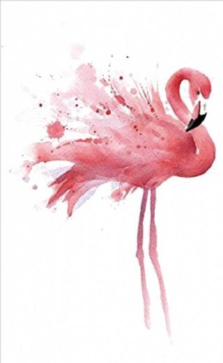 火烈鸟 粉色鸟
