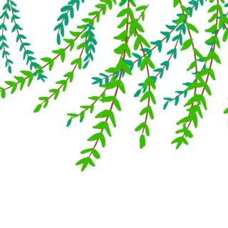 春天綠色的柳葉免摳圖