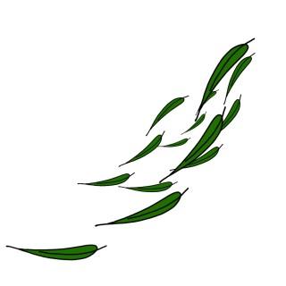 飄落下來的綠色的柳樹樹葉