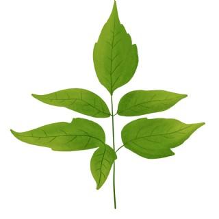 春天綠色樹葉一枝